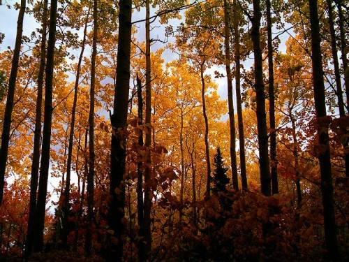 Деревья широколиственного леса