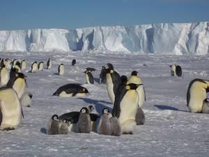 Млекопитающие антарктиды