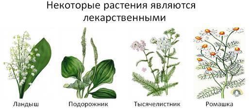Разнообразие растений картинки