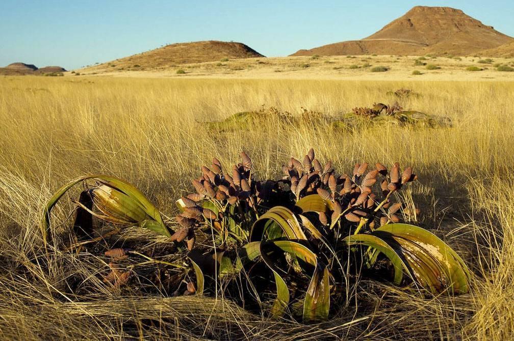 Удивительные растения россии