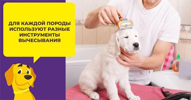 Мохнатая порода собак