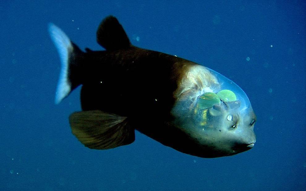 Необычные морские рыбы