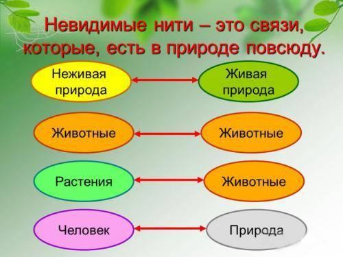 Связь между различными животными схема