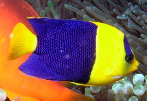 Редкие виды рыб
