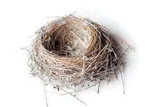 Как птицы делают гнезда