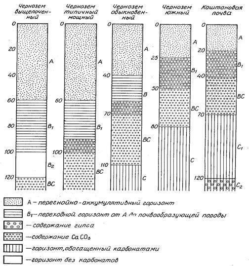 Серые лесные почвы характерны для природной зоны