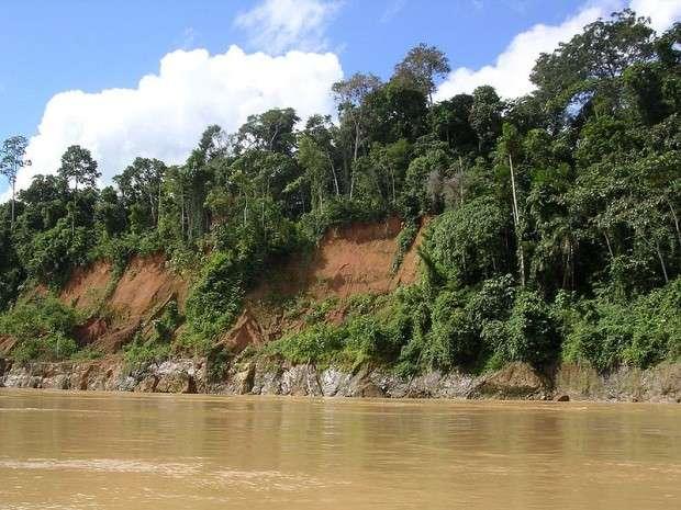 Тропический пояс растительный и животный мир