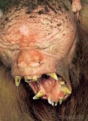 Самые уродливые животные в мире фото