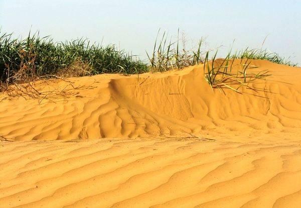 Какую территорию занимает пустыня в россии