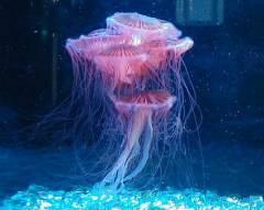 Зачем нужны медузы