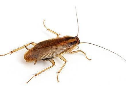 Виды конечностей у насекомых
