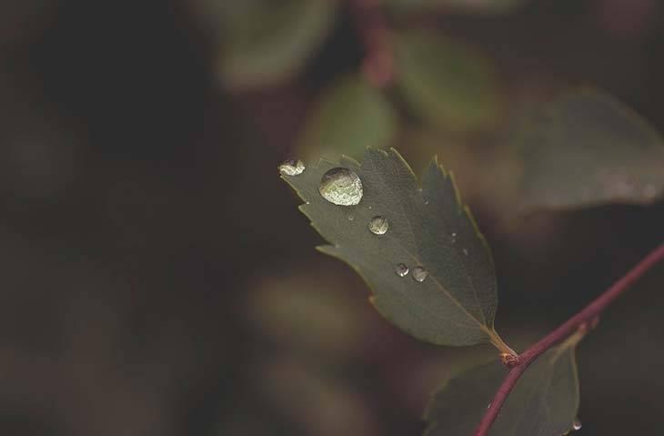 Рассказ на тему весенний дождь