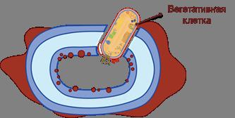Различия строения клеток эукариот и прокариот