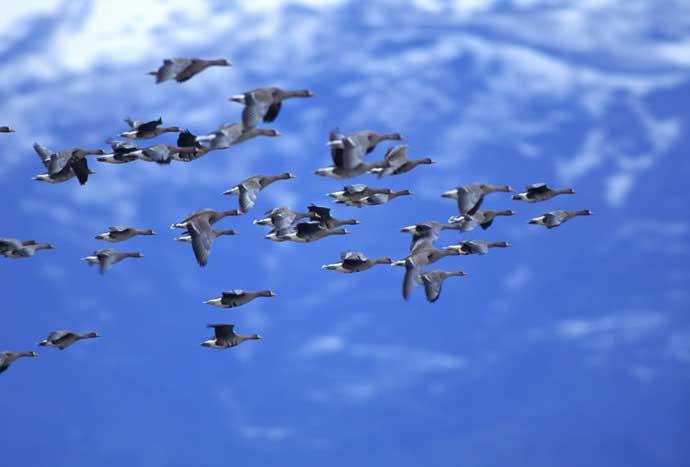 Почему перелетные птицы улетают на юг