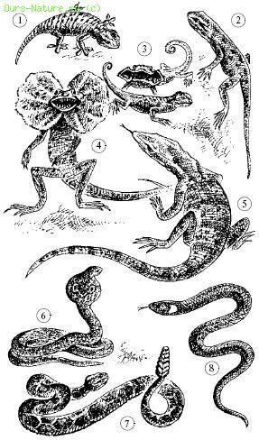 Млекопитающие рептилии