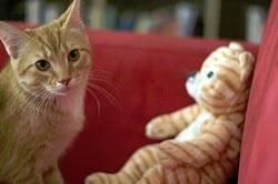 Удивительные факты о кошках