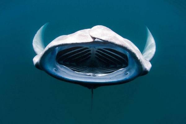 Доисторические акулы фото