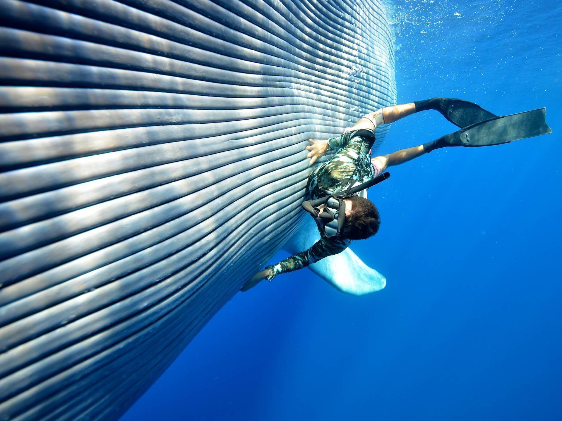 Размножение китов