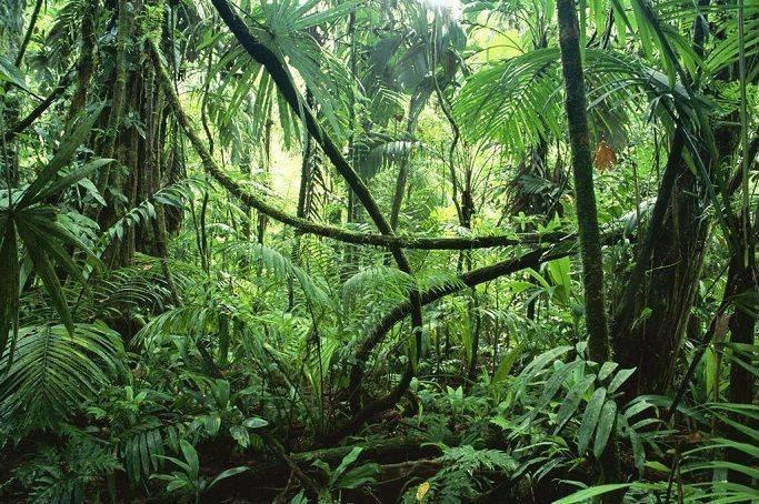 Температура в экваториальных лесах