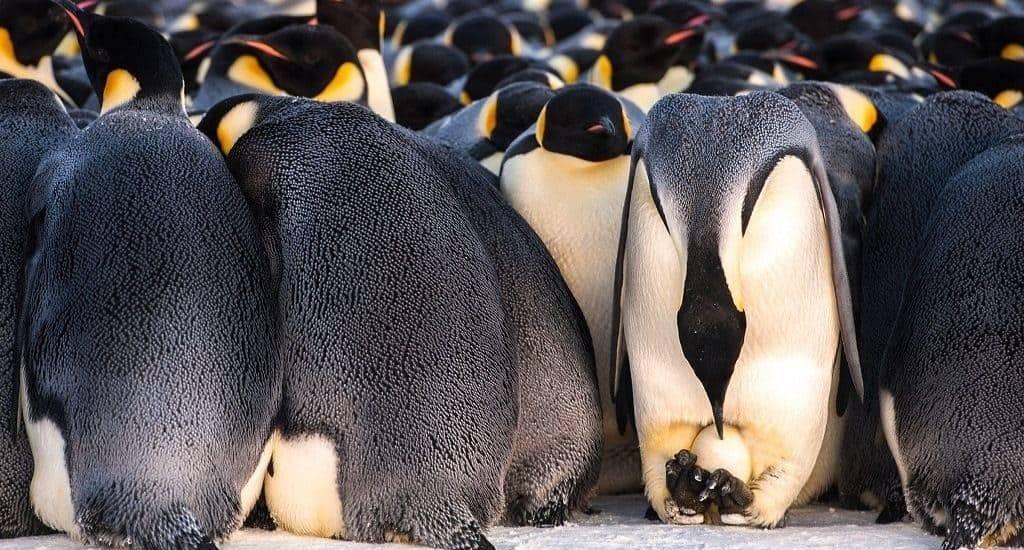 Пингвин млекопитающее или нет