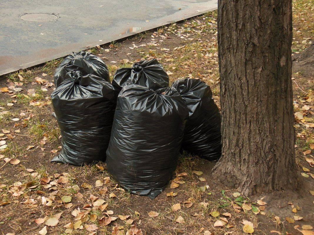 Сколько лет разлагается пластик