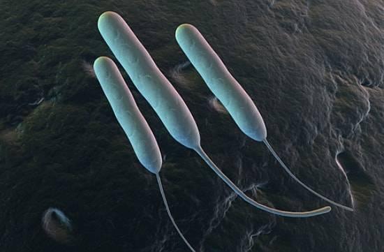 Какие бывают микроорганизмы