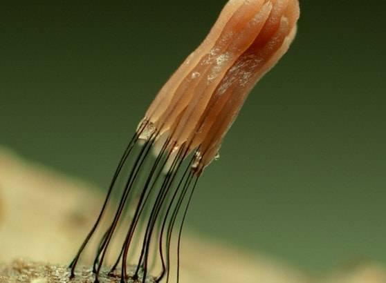 Интересные факты о простейших организмах