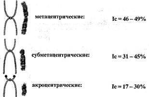 Метацентрические хромосомы