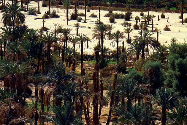 Характеристика тропических пустынь