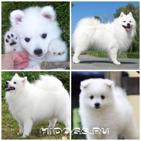 Породы миниатюрных собак с фотографиями и названиями