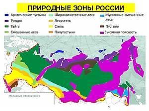 Природные зоны россии расположены так
