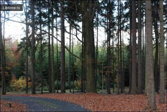 Сочинение о пользе леса