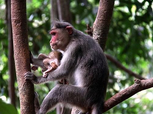Примат обезьяна