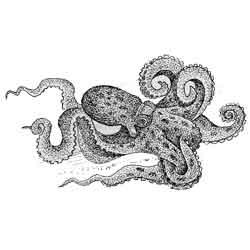 К какому виду относится осьминог