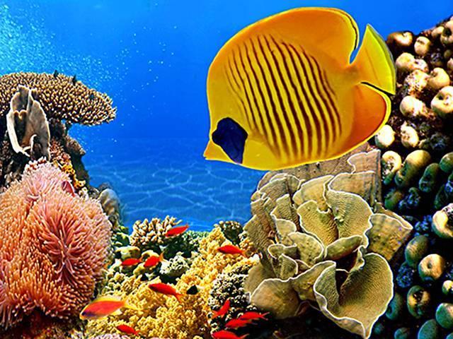 Водные обитатели морей и океанов