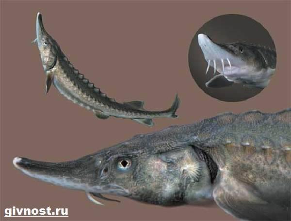 Какие рыбы занесены в красную книгу