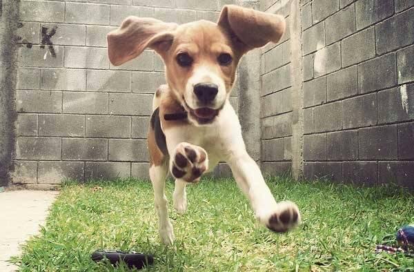 Универсальная собака для охоты
