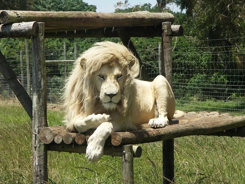 Породы львов