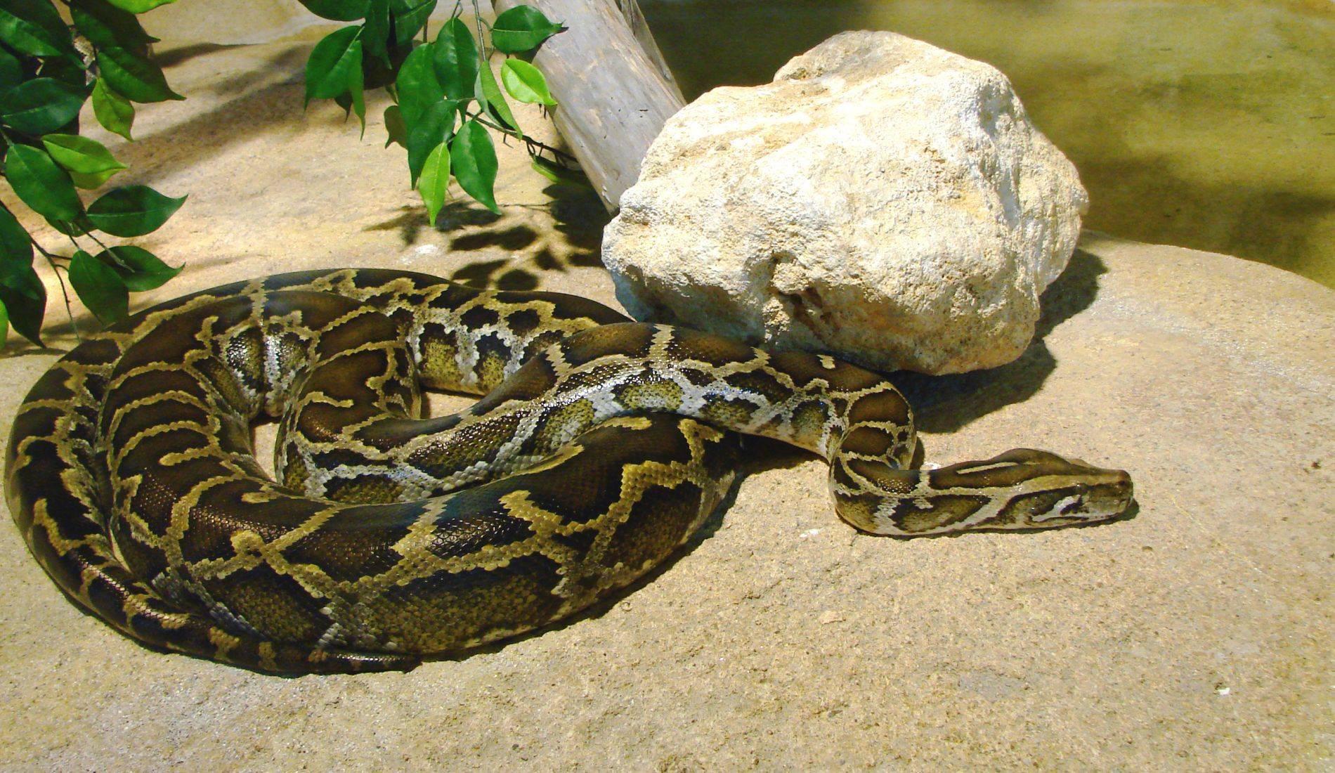 Найбільша змія в світі