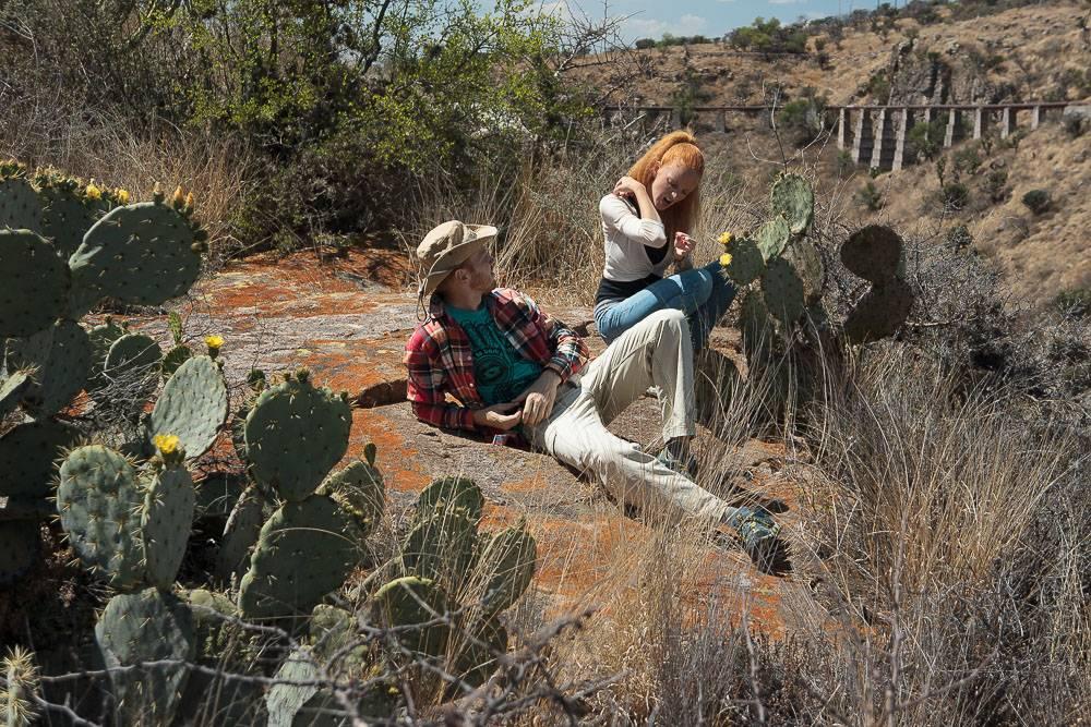 Родиной какого растения является мексиканская пустыня