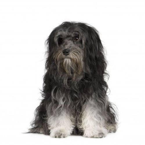 Самые дорогие собаки в мире фото
