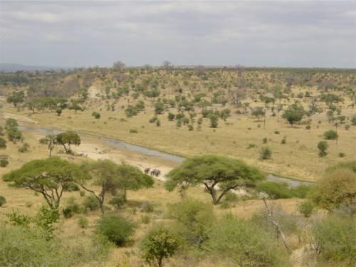 Саванна характеристика природной зоны
