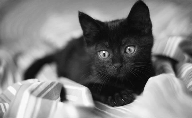 Имя для черной кошечки