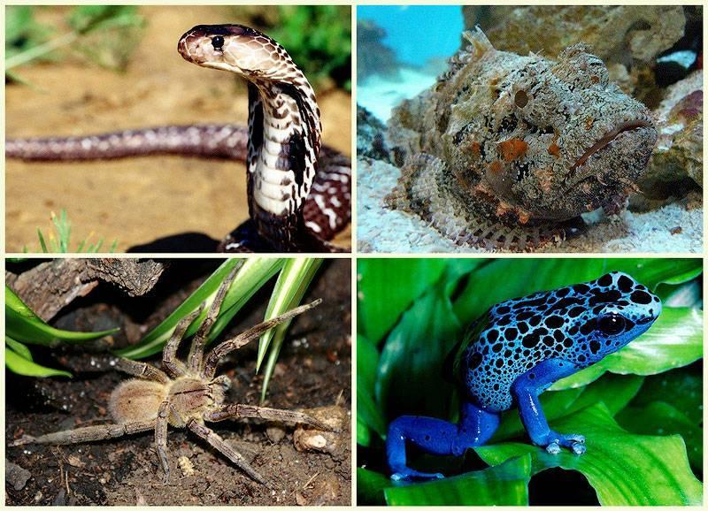 Топ 10 самых ядовитых животных в мире