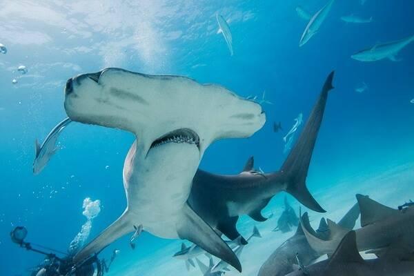 Жители тихого океана фото с названиями