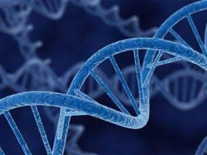 Гаплоидное число хромосом