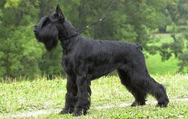 Фото собак средних размеров