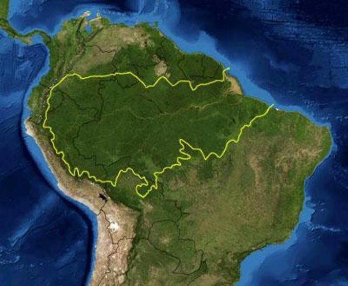 Леса амазонки фото