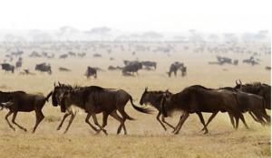 Животные степи фото и названия и информация