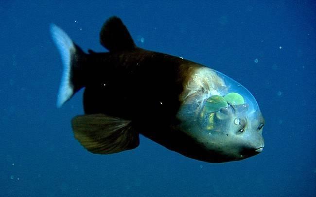 Интересные морские рыбы